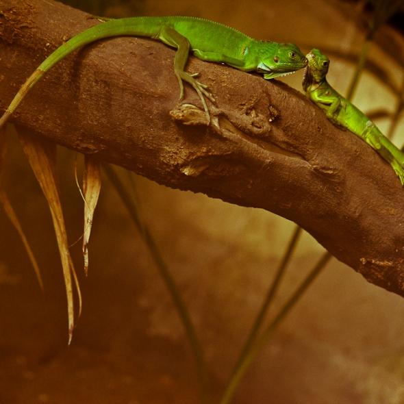 Zoológico de Barranquilla Faroliando William Galindo Blog